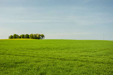 green field and trees on a horizon