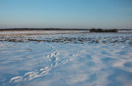 Traces on the snow, big meadow, horizon and sky - winter view 写真素材