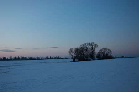 Snow on the field and a group of trees on the horizon - winter evening view