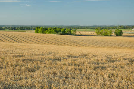 Hilly stubble on the field, horizon and sky. Staw, Poland