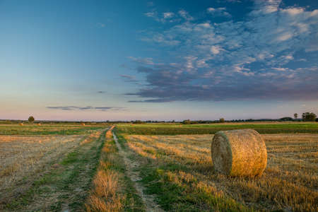 Dirt road through fields and hay, evening view
