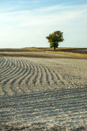 A plowed field and a lonely deciduous tree
