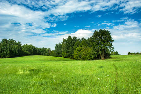 Green meadow and shrubbery, white clouds on blue sky Stock fotó