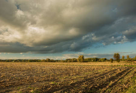 Gray cloud and stubble after corn