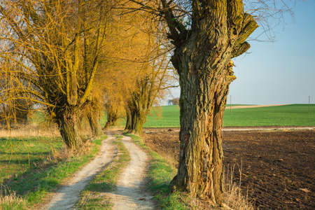 Country road between old trees, spring day Фото со стока