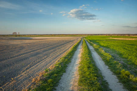 Rural road and plowed field, horizon and cloud on blue sky