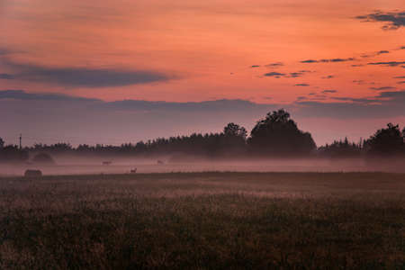 Fog on the meadow, colorful clouds after sunset