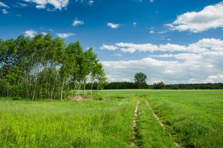 Strada a terra erba invasa attraverso prati verdi e campi, alberi e nuvole su cielo blu