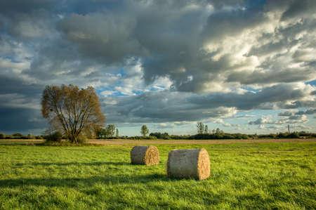 Kręgi siana leżące na zielonej łące, drzewo i piękne chmury na niebie