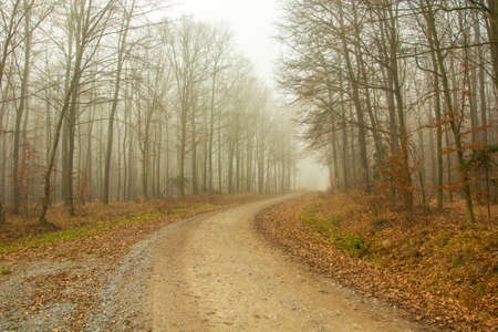 Gravel road through the forest, autumn view, foggy day