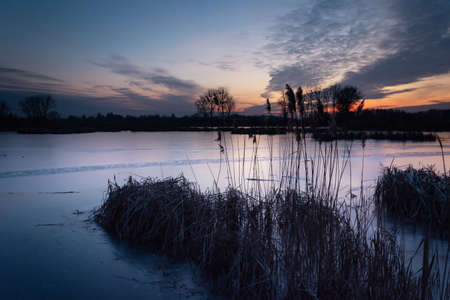 Reeds on a frozen lake, beautiful evening clouds after sunset