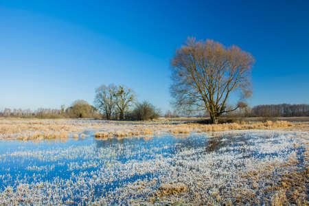 Hoarfrost and ice on a grassy meadow, tree and blue sky