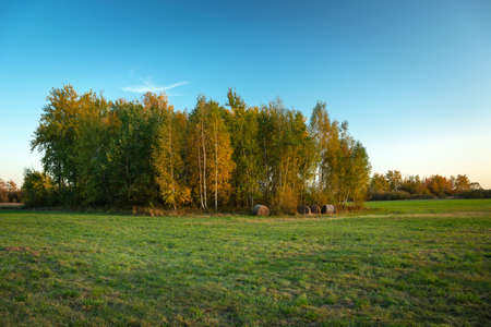 Grove with green and yellow leaves, meadow and blue sky 写真素材 - 138836779