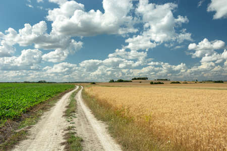 A dirt road through fields and white clouds on a blue sky