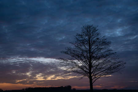 Silhouette of a tree without leaves, clouds after sunset