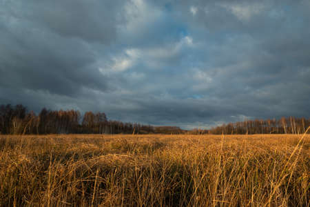 Orange tall grass, forest and stormy sky 写真素材 - 138838737
