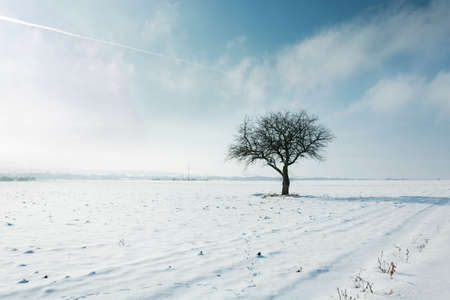 Lonely tree in a field covered with snow Stok Fotoğraf