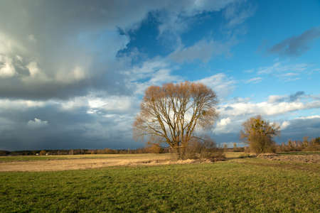 Trees without leaves growing in the meadow and fantastic clouds