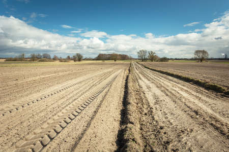 Traces of tractor wheels on a plowed field, dirt road, horizon and white clouds on a blue sky