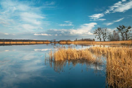 Dry yellow reeds in the blue lake and clouds reflecting in the water