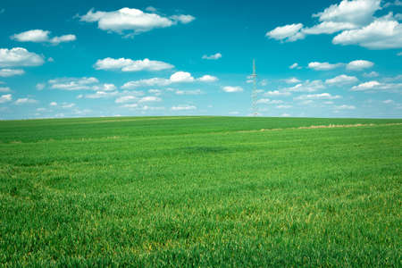 A huge green field, horizon and white clouds on a blue sky, sunny spring view