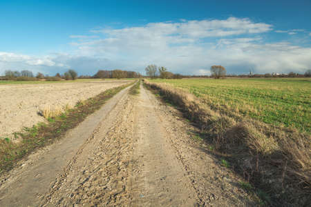Sandy road through fields, horizon and white clouds on blue sky, sunny spring view