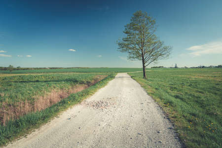 Lonely green tree by the dirt road and blue sky