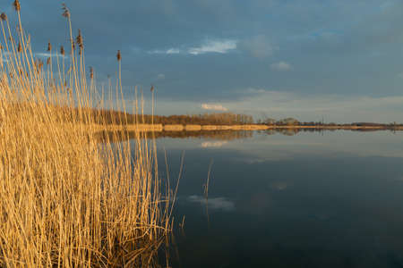 High dry reeds growing in a calm lake, evening dark clouds on the sky Banque d'images