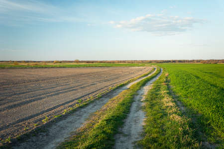 A country road through fields, horizon and sky, spring view