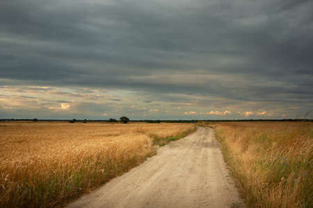 A dirt road through fields with golden grain and a cloudy sky, summer view