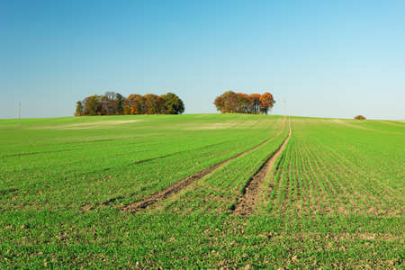 Huge green field and autumn trees to the horizon, October sunny day Stock fotó