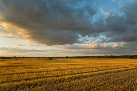 Large stubble and cloudy evening sky illuminated by the sun, summer view Stok Fotoğraf