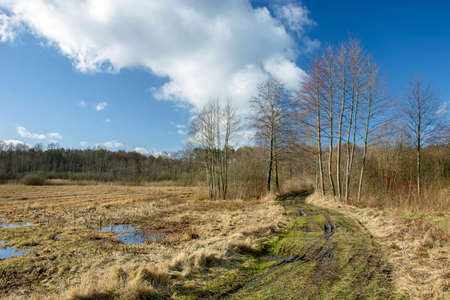 A wet road to the forest and marshy meadows Reklamní fotografie