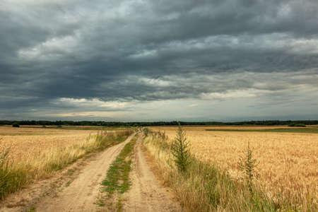 Sandy road through grain fields and cloudy sky