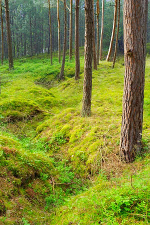 leftover: Old trench in the forest ? the leftover of the World War II.