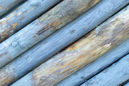 aslant: Blue colored tree stumps. Stock Photo