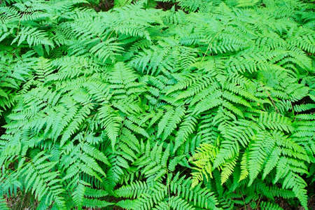 fronds: Fern fronds in the forest.
