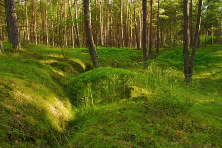 temperate: Forest understory. Pomerania, northern Poland. Stock Photo
