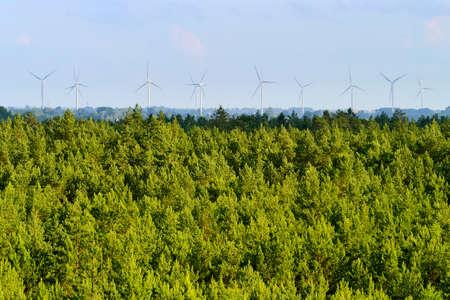 pinewood: Aerial view of pinewood and wind turbines on the horizon. Pomerania, northern Poland. Stock Photo