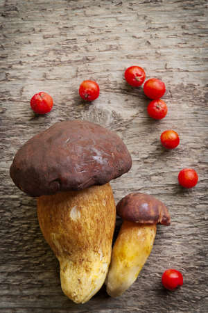 Top view of two pine bolete (Boletus pinophilus) mushrooms decorated with red rowan berry fruits. Still life photo.