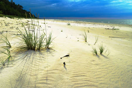 Sandy beach at the Baltic sea with growing sand ryegrass, Leymus arenarius. Dramatic stormy tempestuous sky. Pomerania, northern Poland.