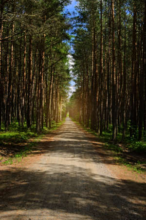 Dirt road or path through dark evergreen coniferous pine forest. Pinewood with Scots or Scotch pine Pinus sylvestris trees growing in Pomerania, Poland. Reklamní fotografie