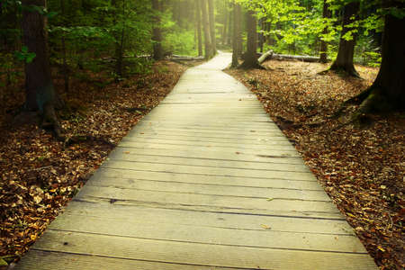 Wooden pathway through the misty autumn forest. Swietokrzyskie Mountains, Poland.