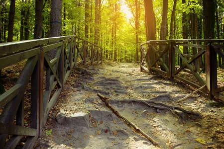 Trail through the autumn forest. Swietokrzyskie Mountains, Poland.