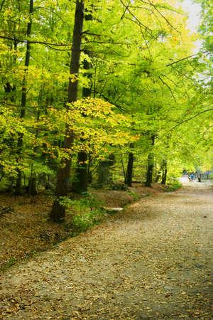 Romantic beech alley in the autumn park. Swietokrzyskie Mountains, Poland.