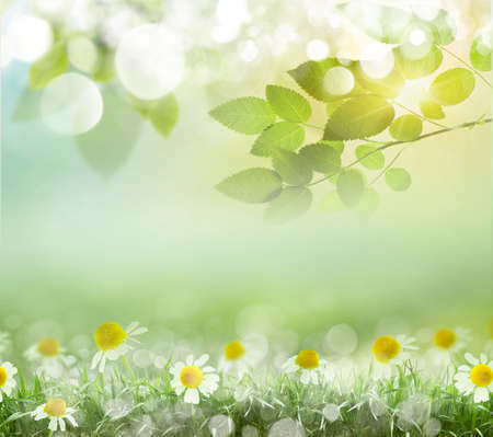 boke: Beauty natural spring background with daisies. Boke Stock Photo