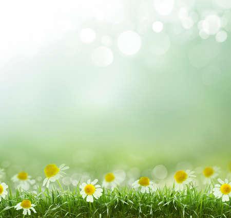 background: natürlichen grünen Hintergrund mit selektiven Fokus Lizenzfreie Bilder