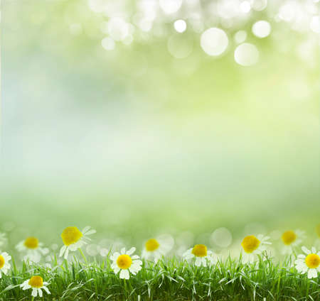 natural beauty: Beauty natural spring background with daisies. Boke Stock Photo