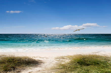 ocean plants: Sea sun sand and relaxation