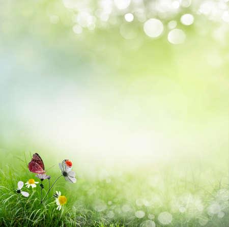 ladybug on leaf: Spring background with flowers and ladybug